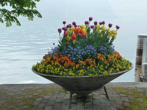 Spring flowers Lake Lucerne