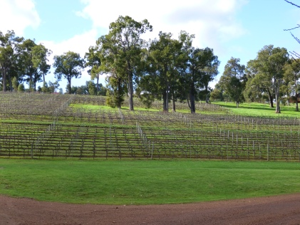 Winter vines Millbrook Winery WA