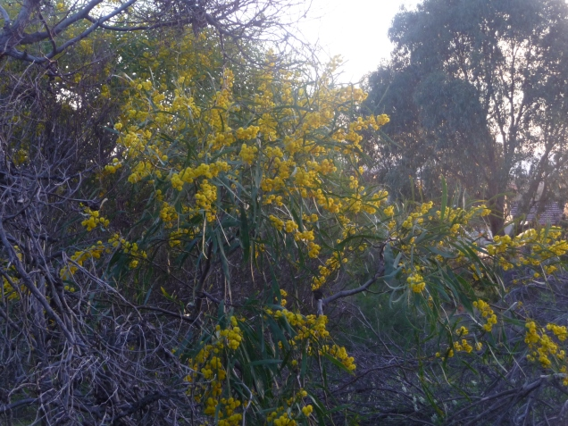 Native Plants Urban Bushland Perth