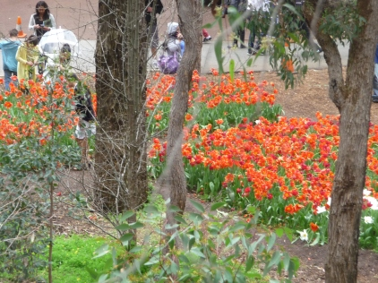 Tulips everywhere the Spring Festival Araluen