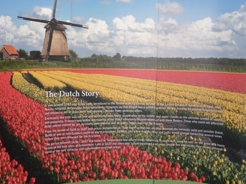 The Dutch Story The Araluen Spring Festival