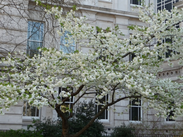 Spring blossoms Postmans Park