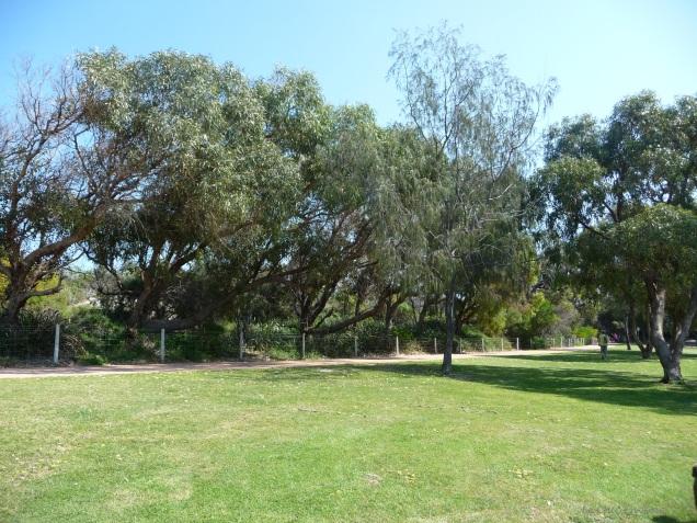 Trees along the coastal path provide welcome shade