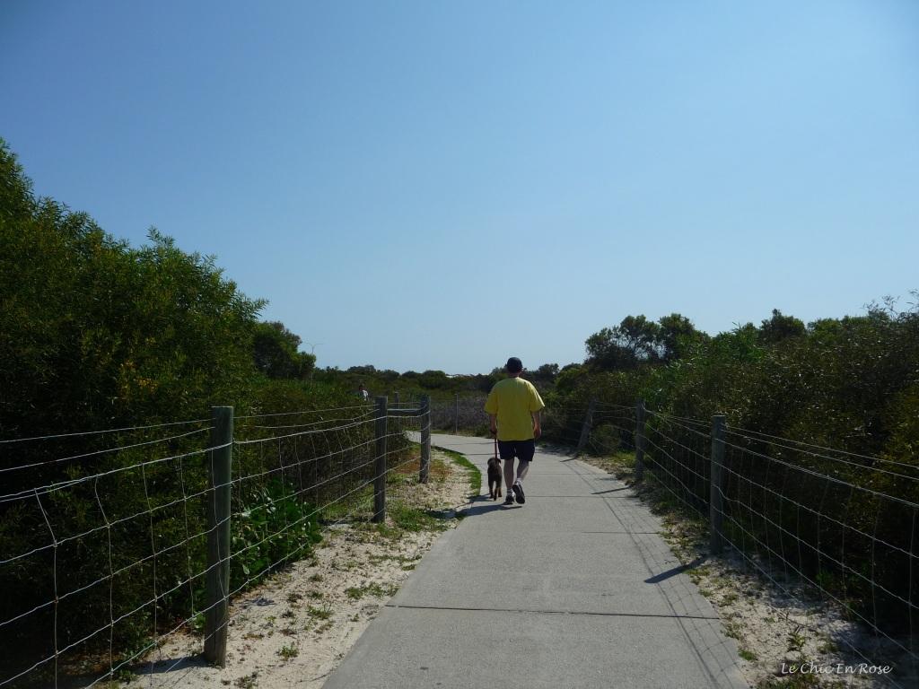 Winston Le Schnoodle walking along the coastal path near Hillarys Beach