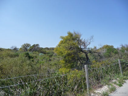 Natural bushland down by the sea