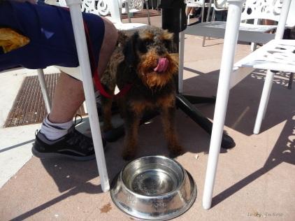 Winston enjoying his refreshments