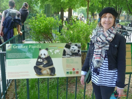 Giant Panda Enclosure Schoenbrunn Tiergarten