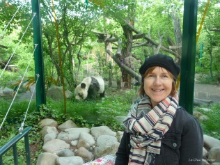"Finally seeing a ""real"" panda again!"