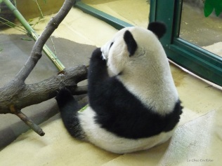 It was fascinating to watch the pandas eating their meal!