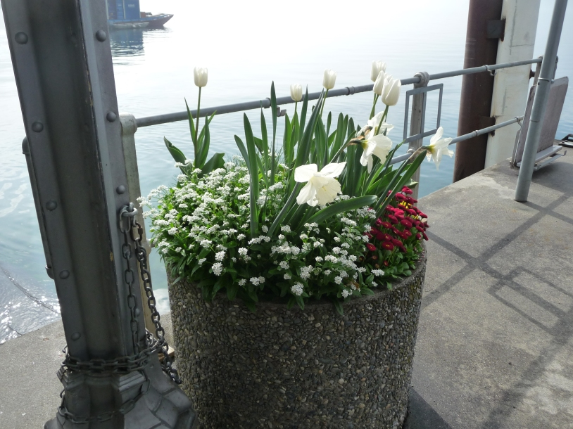 Display of flowers down by Weggis Quay