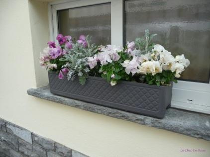 Window Box Weggis