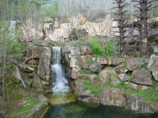Waterfall bear enclosure