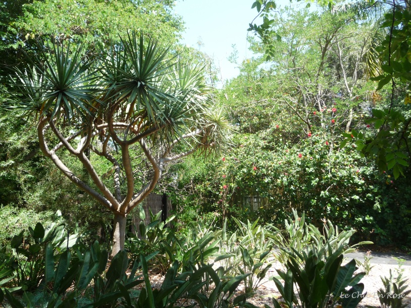 The grounds of Perth Zoo are beautifully maintained and importantly well shaded which makes walking around very pleasant