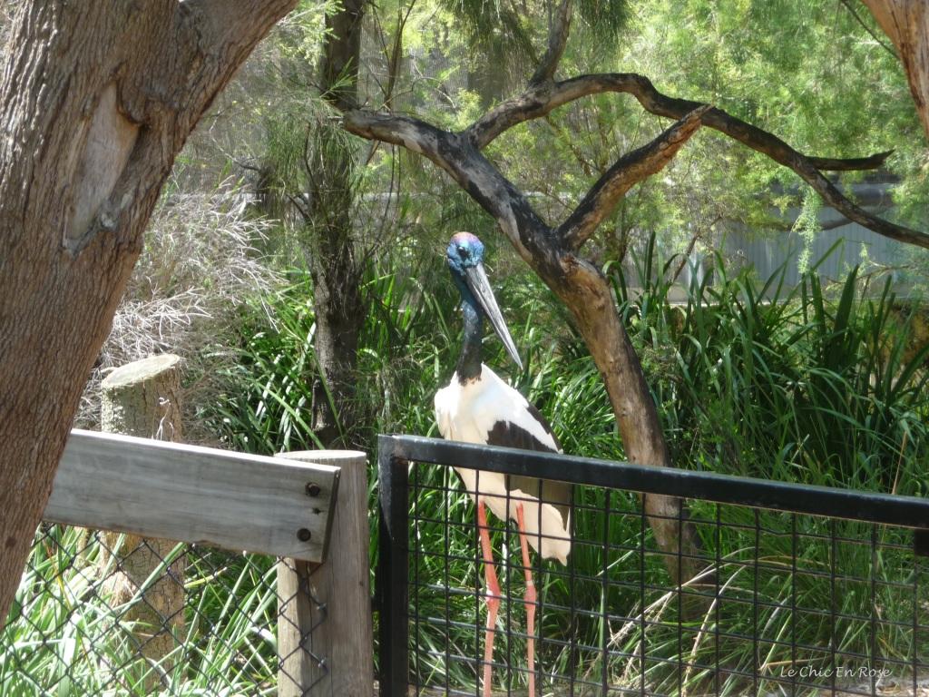 Australian Wetlands Perth Zoo