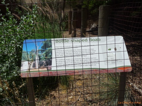 Information on the Boab tree