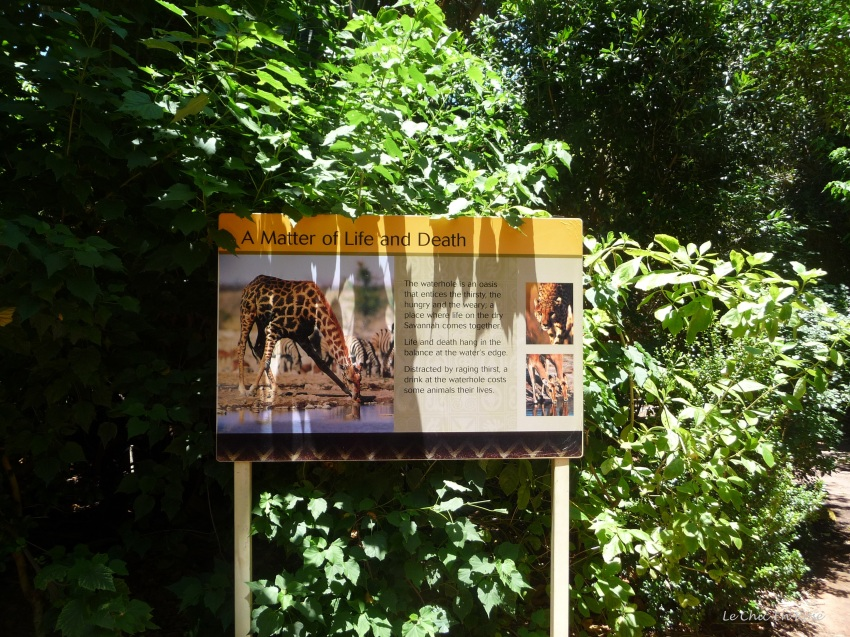 African Savannah Information Board