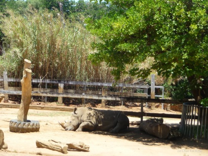 Rhinoceros relaxing in his enclosure