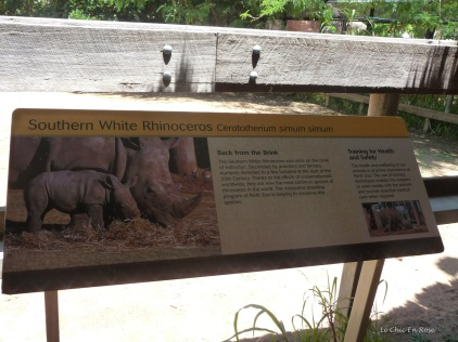 Information about the Rhinoceros
