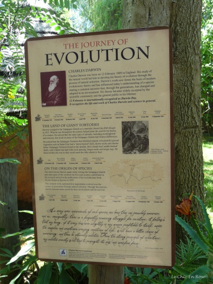 A quick guide to evolution!
