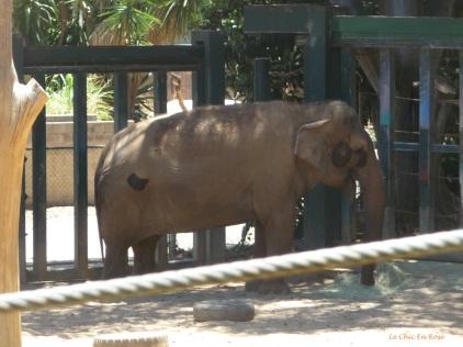 Elephant Perth Zoo