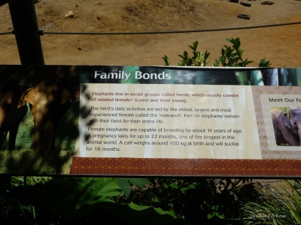 Information about the family bonds between the elephants. Tricia is the matriarch of the herd at Perth Zoo!