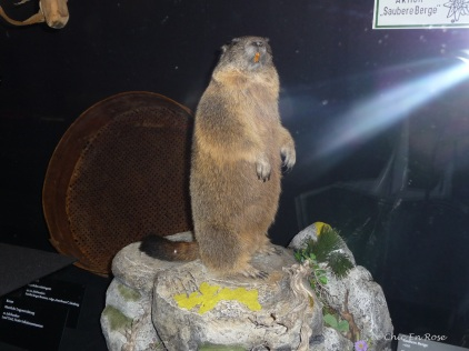 "Marmot exhibit in the ""Showcase Tyrol"" section"