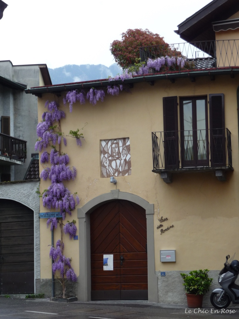 Wisteria climbing up walls typical buildings in side streets of Minusio