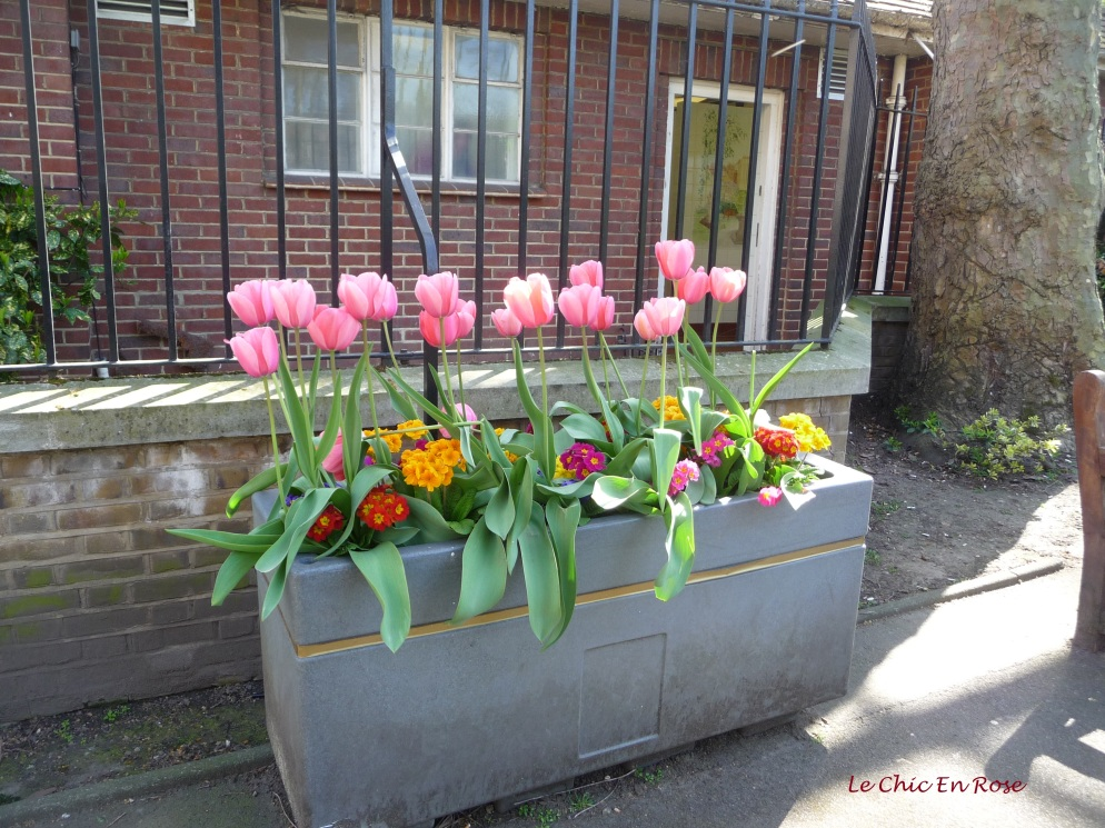 Tulip planter box in Paddington Street Gardens