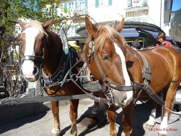 The beautiful horses who kindly pulled our carriage up to the top at Neuschwanstein from Hohenschwangau