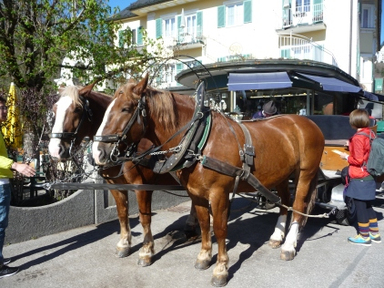 Horse and carriage stop right outside the Hotel Mueller Beer Garden