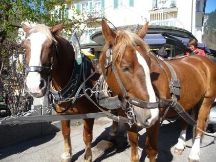 Love the horses!
