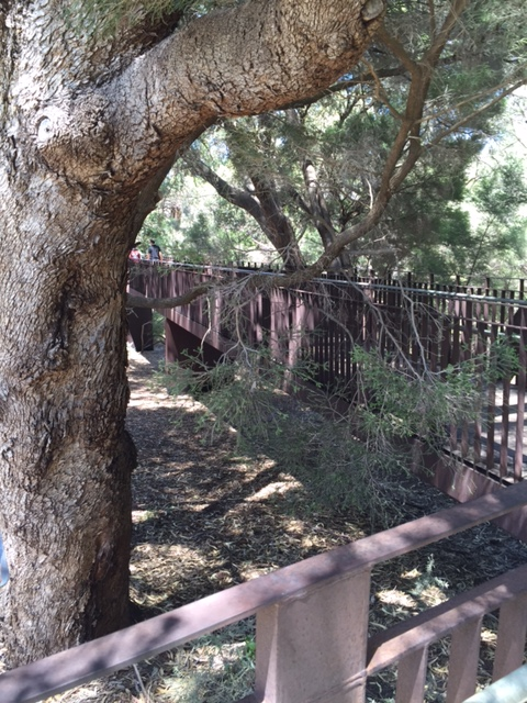 Marri Forest Federation Walkway - end of the bridge