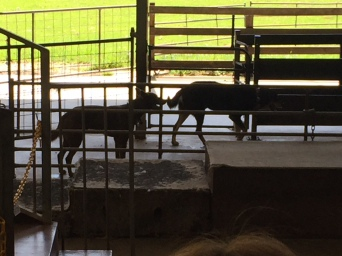 Meeting the working dogs of Molly's Farm