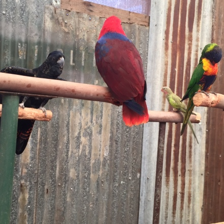 Bird life at Caversham