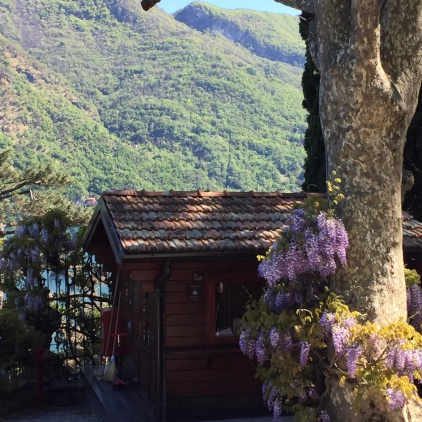 Wisteria Near The Entrance To Villa del Balbianello