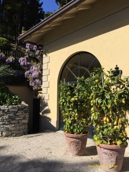 Wisteria and lemons outside the summer house of Villa Balbianello