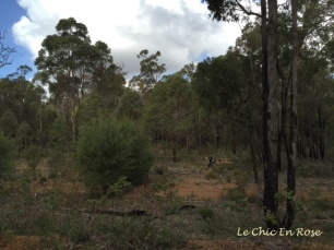 Near Dwellingup WA