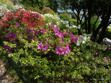 Colourful Azaleas Villa Carlotta