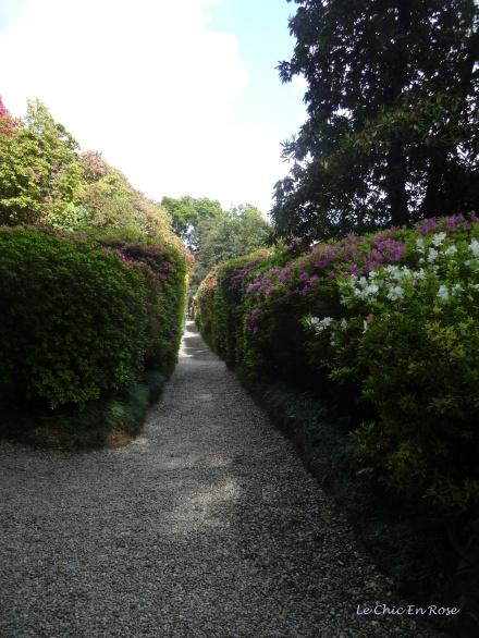 Paths Bordered By Azaleas Villa Carlotta