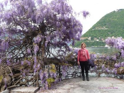 Purple Wisteria By Lake Como