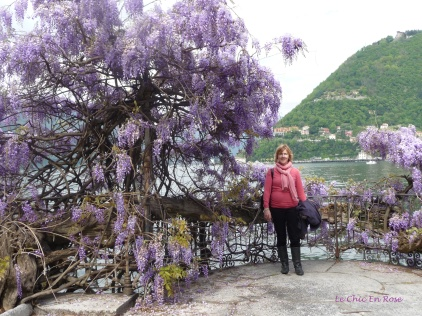 Purple Wisteria By Lake Como