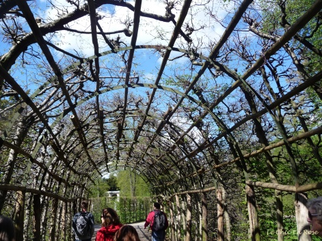 Arbor - Sanssouci Park