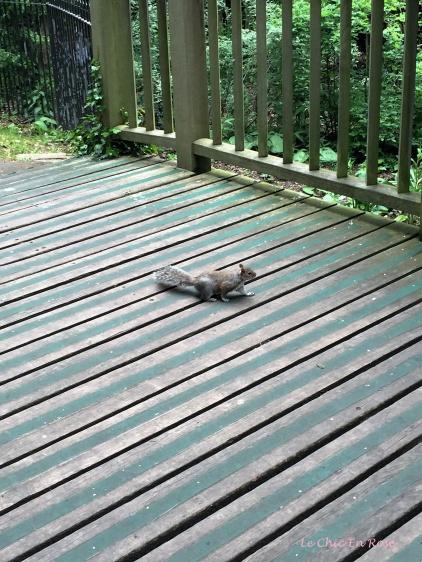 Friendly squirrel!