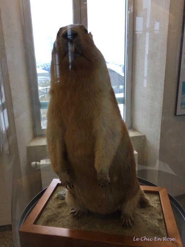 Marmottes Paradis Museum