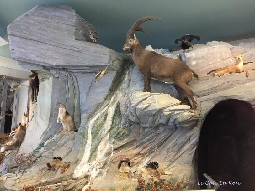 Marmottes Paradis Exhibit
