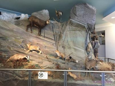 Alpine fauna
