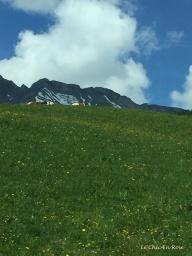 Swiss meadows