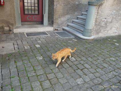 Resident castle cat