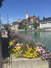 Spring flowers in Thun